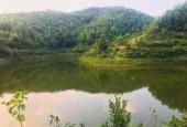 18000m2 đất rừng sản xuất Kim Bôi Hòa Bình, bám hồ cực đẹp