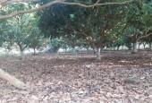 Bán đất Lương Sơn Hòa Bình, 5000m2 thổ cư siêu bằng phẳng, trồng nhiều cây ăn trái