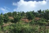 Bán gấp 5HA cam Cao Phong tại Cao phong Hòa Bình đúng đất đã được thu hoạch cực hót