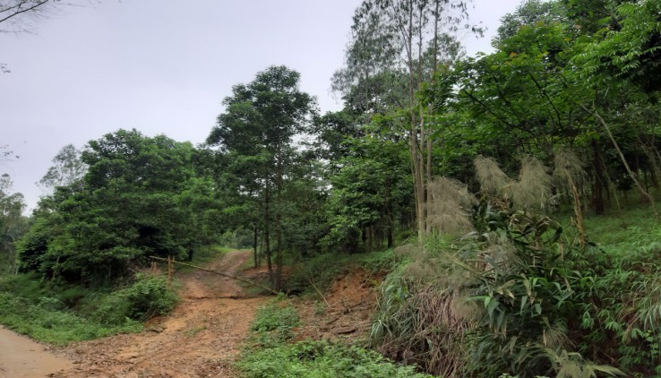 Cần chuyển nhượng  20ha đất rừng sản xuất tại Lương Sơn Hòa Bình giá rẻ đường bê tông lên tận đất