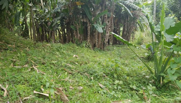 Bán đất Lương Sơn Hòa Bình diện tích 7000m2 làm trang trại nhà vườn,  homestay