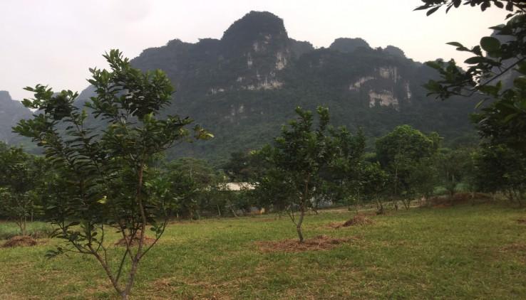 Bán 2000m2 đất Lương Sơn Hòa Bình giá rẻ