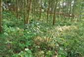 Cần bán lô đất DT 7000m2 tại Tiến Xuân Thạch Thất Hà Nội