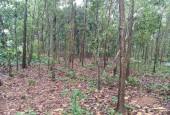chính cần bán 1,2ha đất rừng sản xuất tại tiến xuân thạch thất hà nội