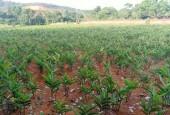 Chính chủ cần bán thửa đất DT 3600m trong đó có 400m đất ở tai hoà sơn lương sơn hoà bình lượng