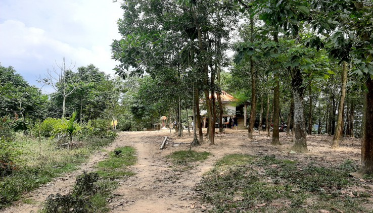 Bán gấp đất RSX có Chuyển đổi dự án nghỉ dưỡng TT Lương Sơn 24ha đồi bát úp có ao lớn viuw đỉnh đầu tư đỉnh