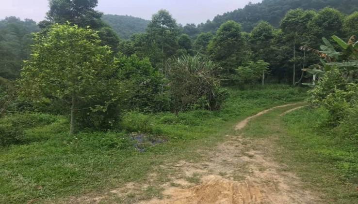 Bán đất view sông suối tuyệt đẹp tại Lương Sơn Hòa Bình diện tích 1,4 ha bám cả mặt đường nhựa liên huyện