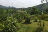 Cần bán diện tích 5000m2 có 800m2 đất ở, sổ Hồng chính chủ sang tên trong ngày.