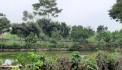 Chính chủ cần bán nhanh lô đất DT 2320m2 trong đó có 400m2 đất ở tại Yên Bình -Thạch Thất -Hà Nội