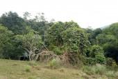 Bán đất tp Hòa Bình 3ha, có 400m thổ cư , view cao thoáng, gần đường lớn giá rẻ.