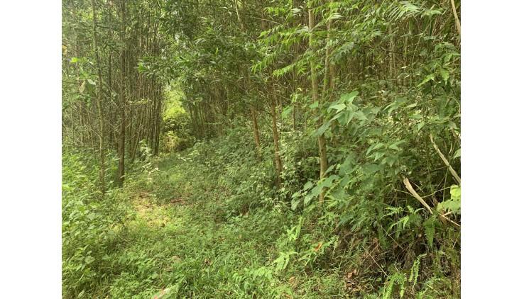 Bán đất lạc thuỷ dt 45564m
