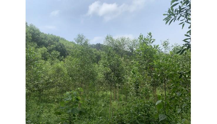 Bán đất lạc thuỷ dt là 380000m